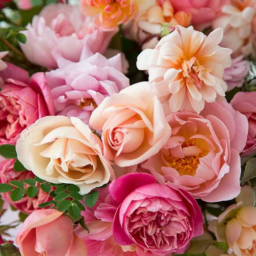 Mixed-pink-heritage-roses