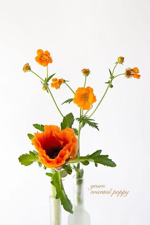 Geum-and-oriental-poppy