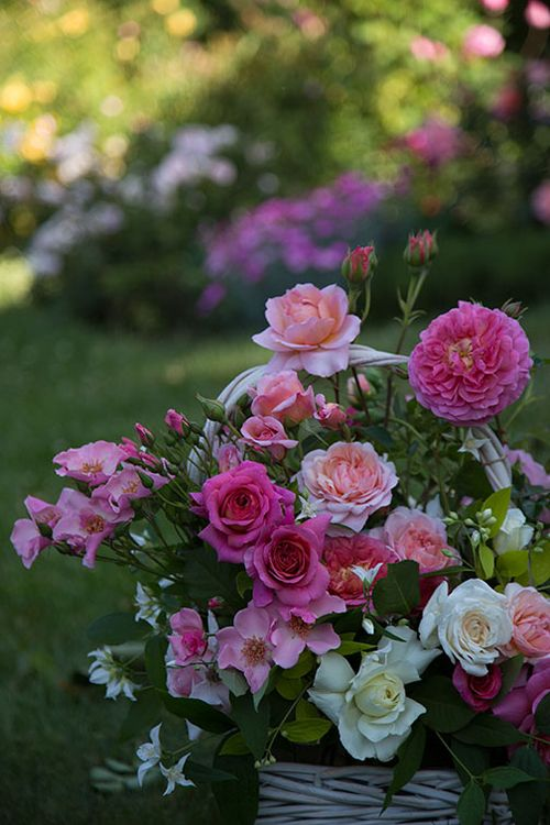 Cassandra's-basket-of-roses