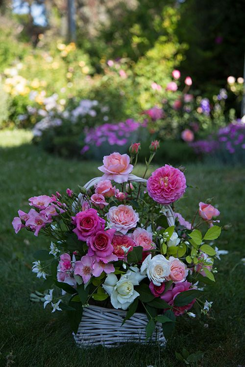 Cassandra's-basket-of-roses-2