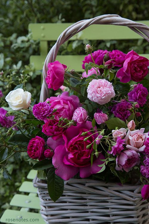 Basket-of-spring-roses