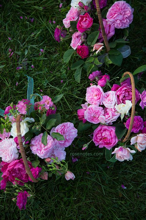 Baskets-of-roses