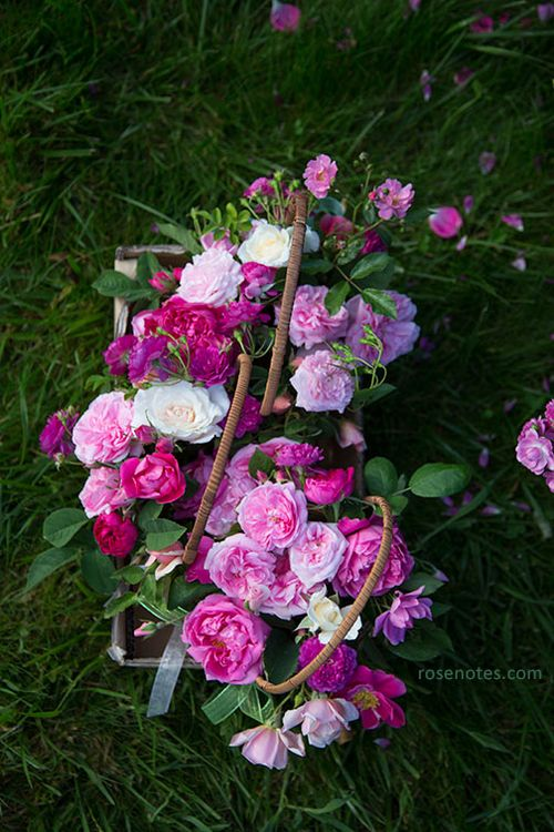 Spring-rose-baskets