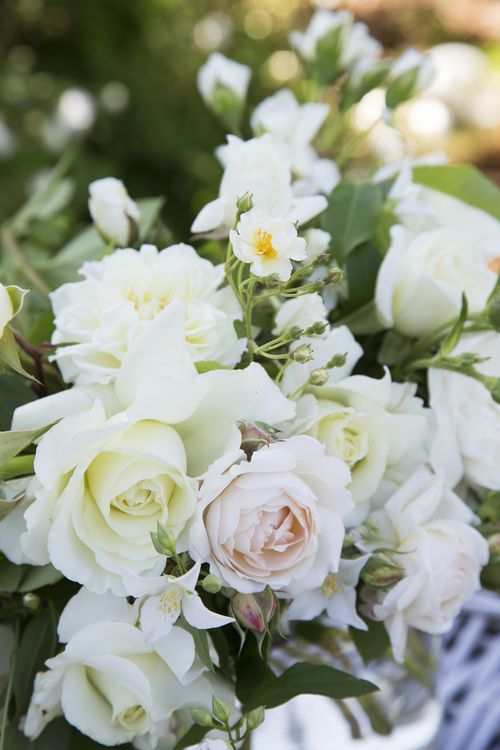 Tumble of white roses
