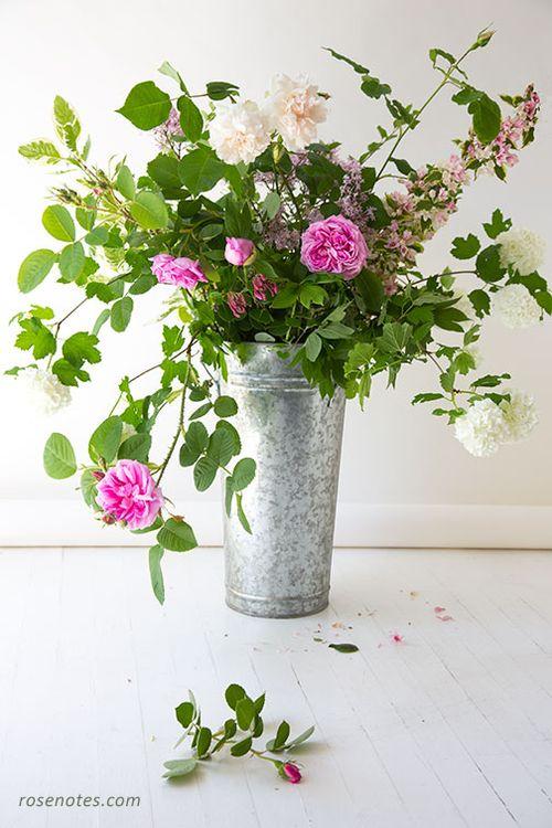 Old-rose-harvest