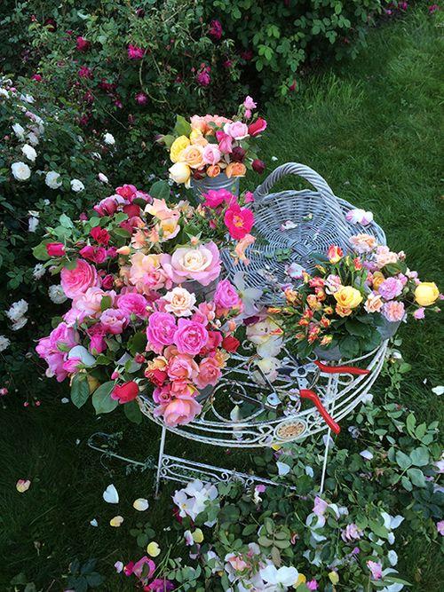 Prepped roses