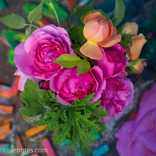 Yves-piaget-rose