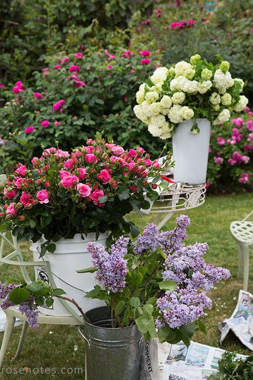 Lilac-harvest