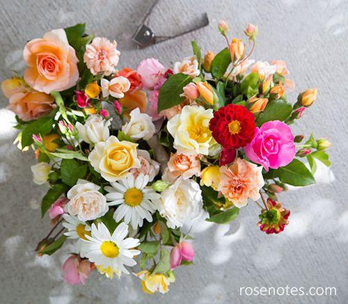 Rose-harvest