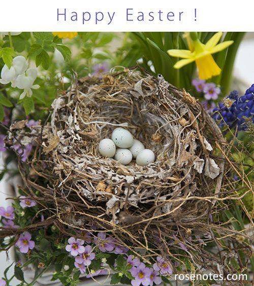 Eggs in nest easter