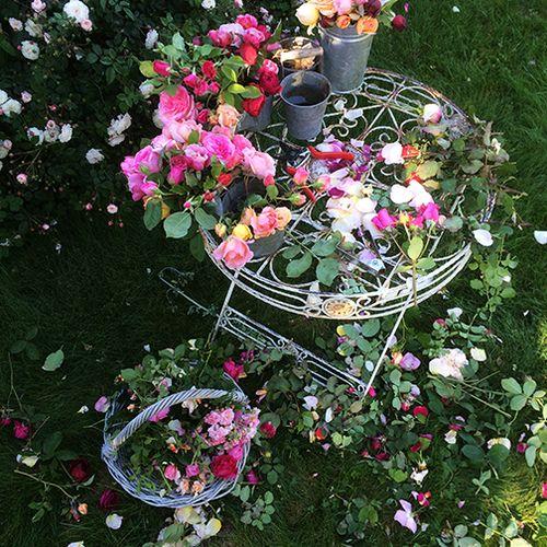 Preparing roses