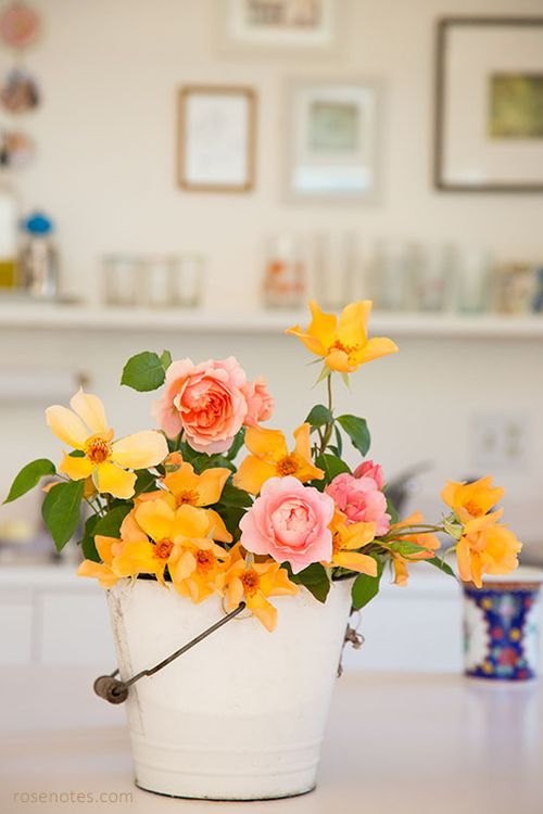 Roses-in-the-kitchen