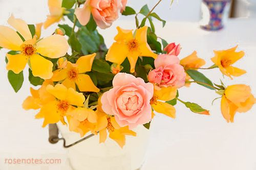 Peach-and-orange-roses