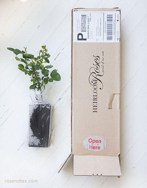 Heirloom-rose-packaging