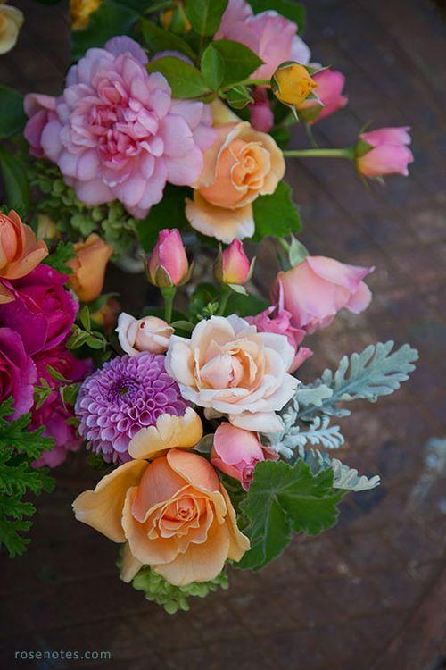 Multi-color-roses