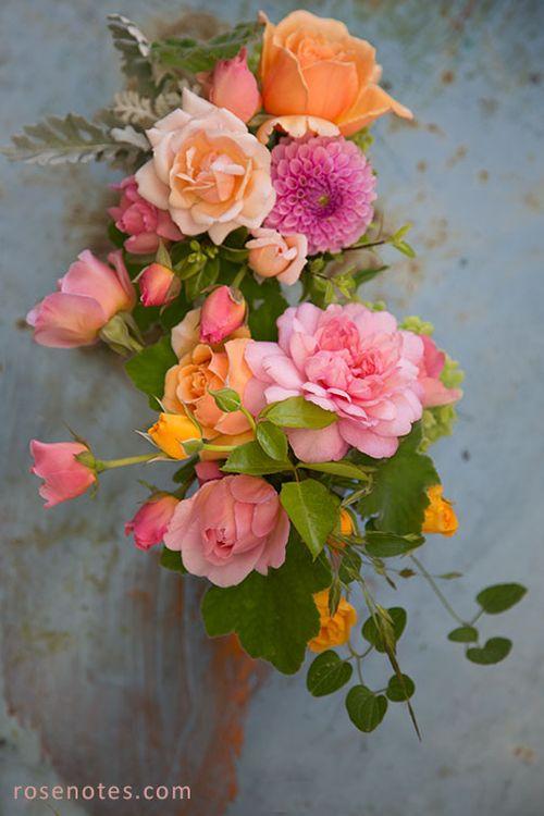 Peachy-roses