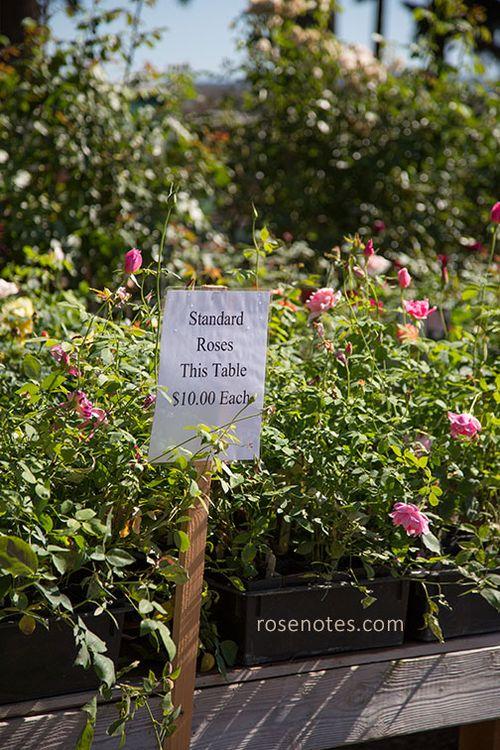 Sale-roses-at-heirloom