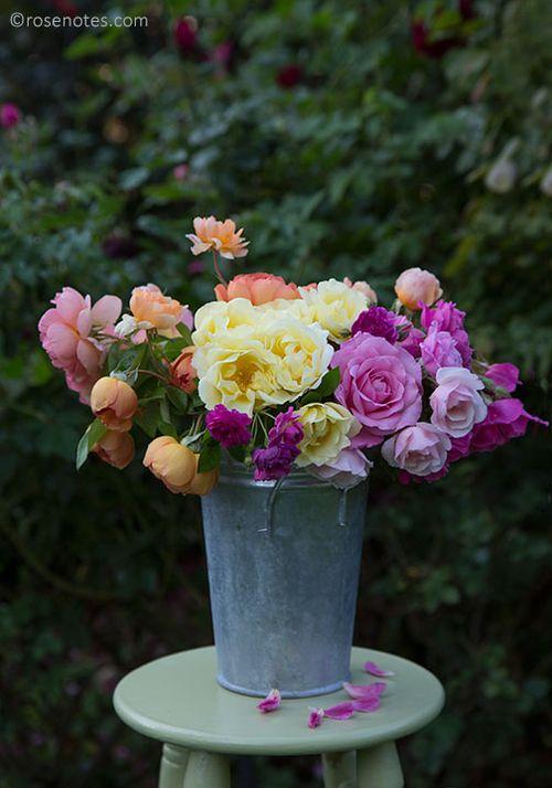 Bucket-of-roses-