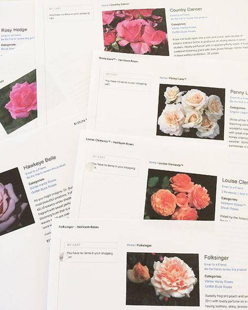 Tear-sheets-heirloom-roses