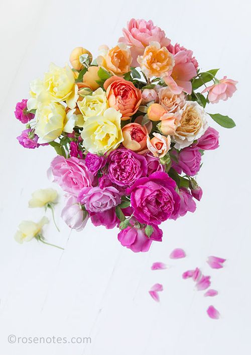 Ombre-roses-1