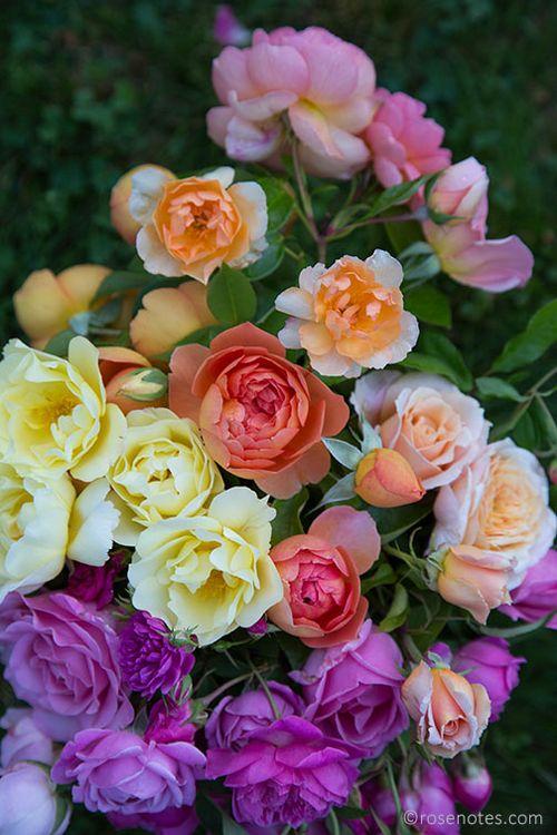 Muslti-rose-tapestry