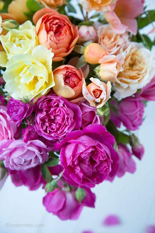 Multi-roses