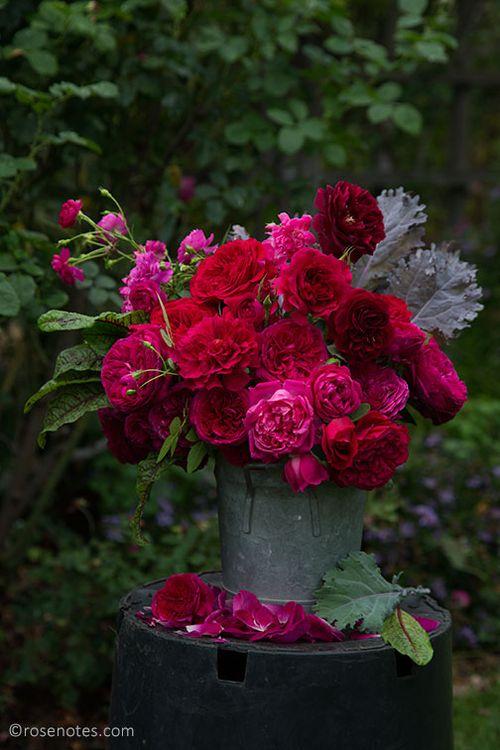 Red-david-austin-roses