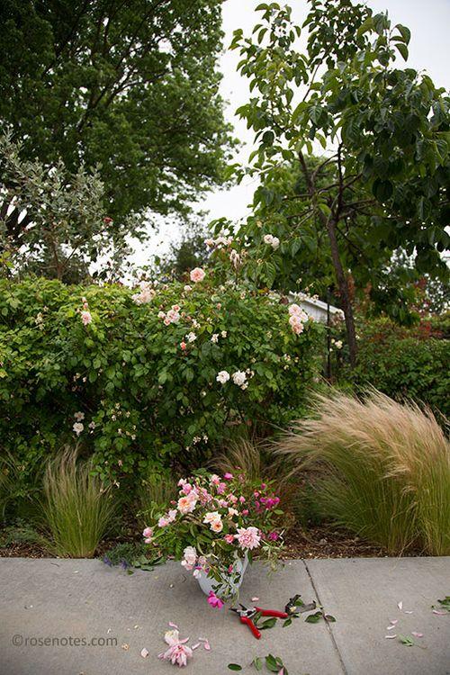 Bouquet-in-garden