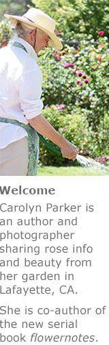 Carolyn_tp_badge_2
