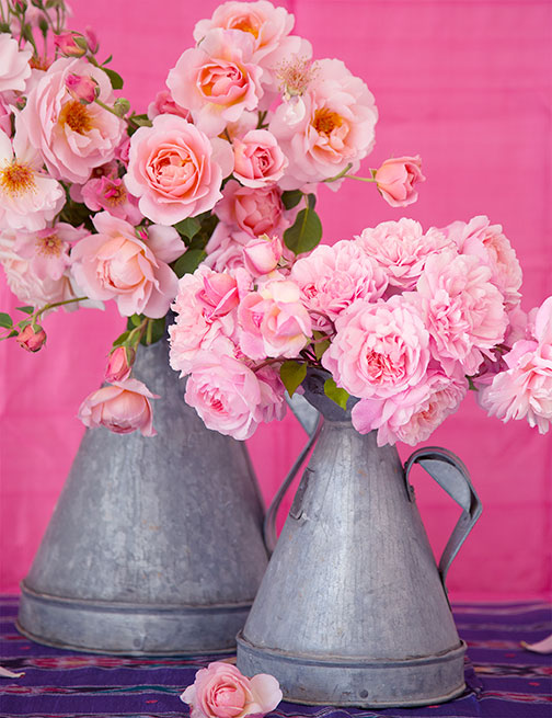ARS-article-pink-roses