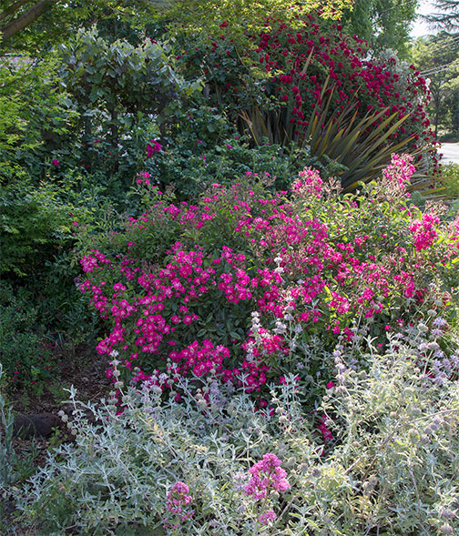 ARS-carolyn-parker-garden