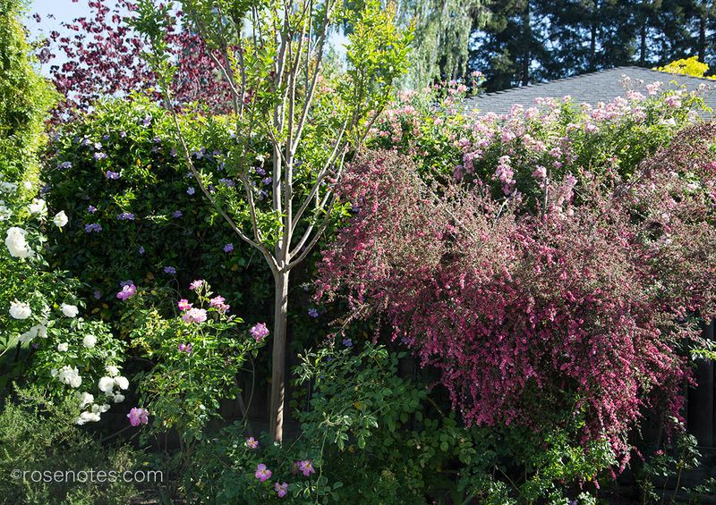 Spring-Blossoms-&-Roses