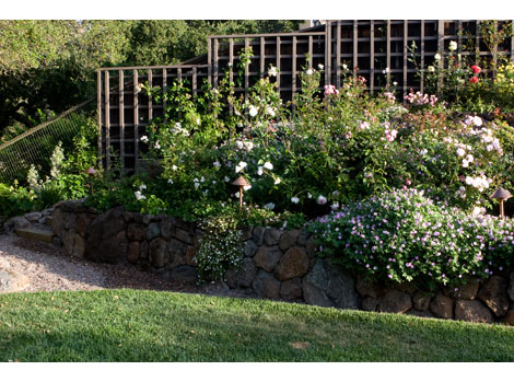 7-pruning-your-roses