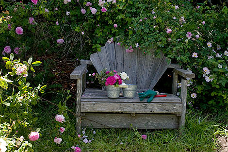 Rose-bench