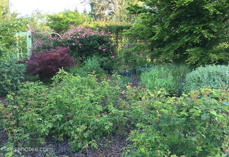 Rose-Garden-from-Outside-Fence
