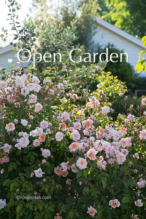 Carolyn-parker-open-garden_3