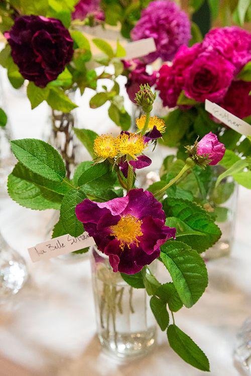 La-belle-sultane-rose