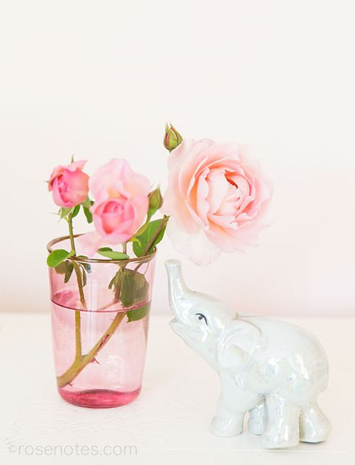 Elephant-and-Pink-Rose