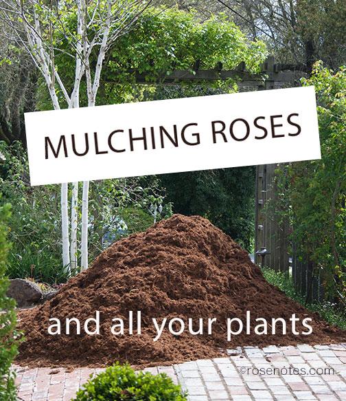 Mulching Roses Rose Notes