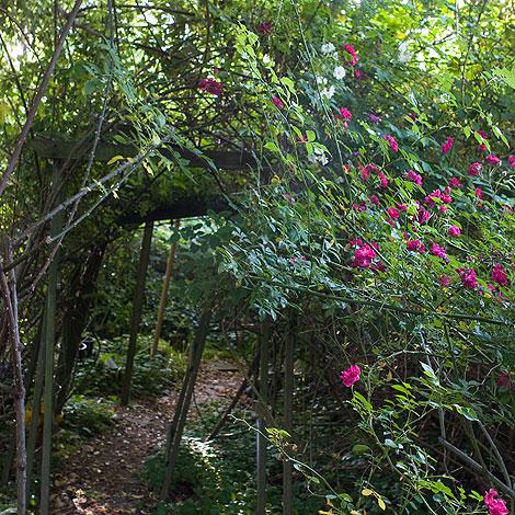M wilkinson garden