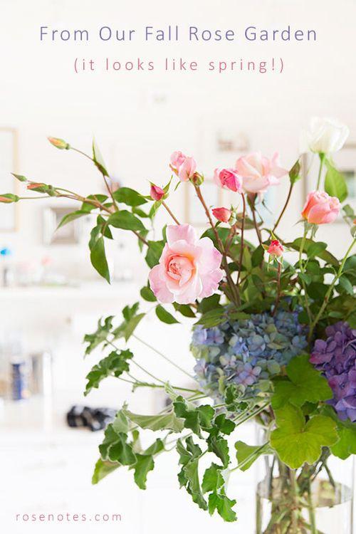 Pink-roses-&-hydrangeas