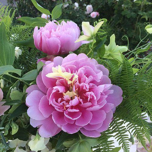 Flowernotes-peony