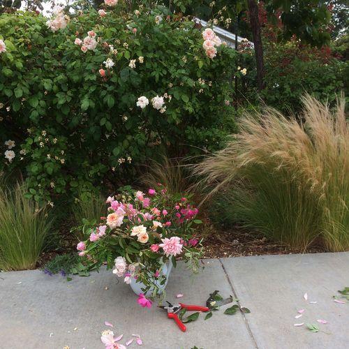Rose_bouquet_in_garden
