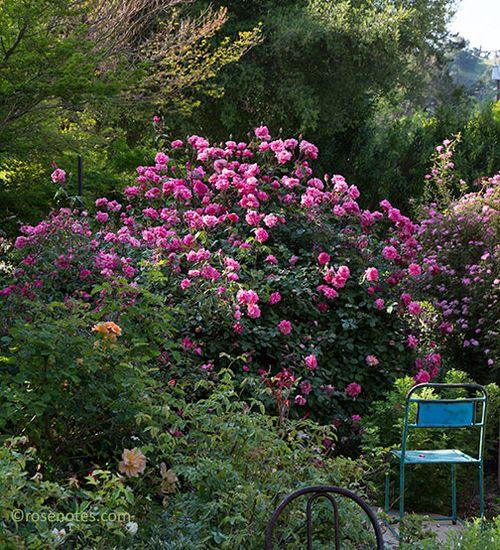 M_tillier_in_garden