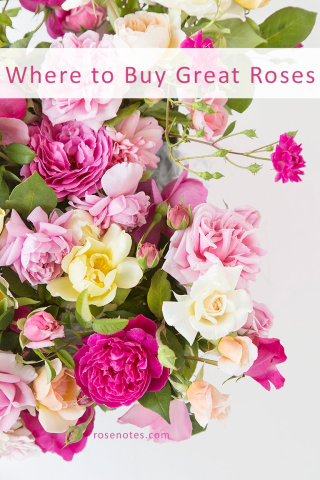Where-to-buy-good-roses