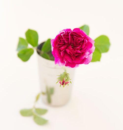 ARS-russeliana-rose