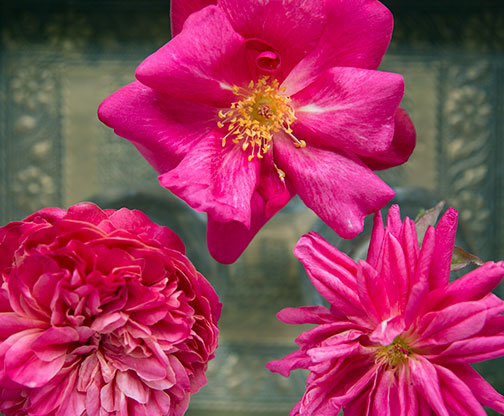 3-chinese-roses