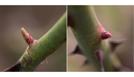 Pruning-directions