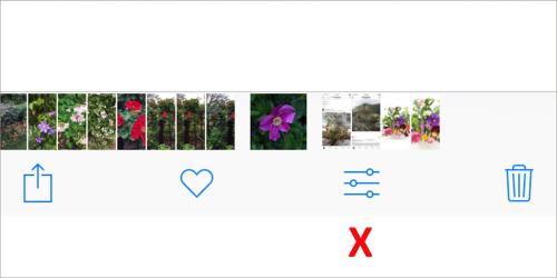 Iphone_photo_ap