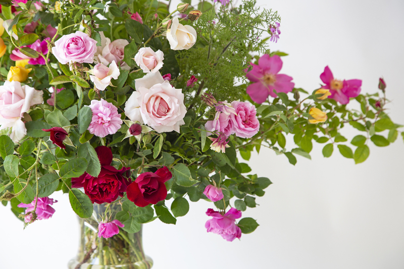 Where to buy great roses